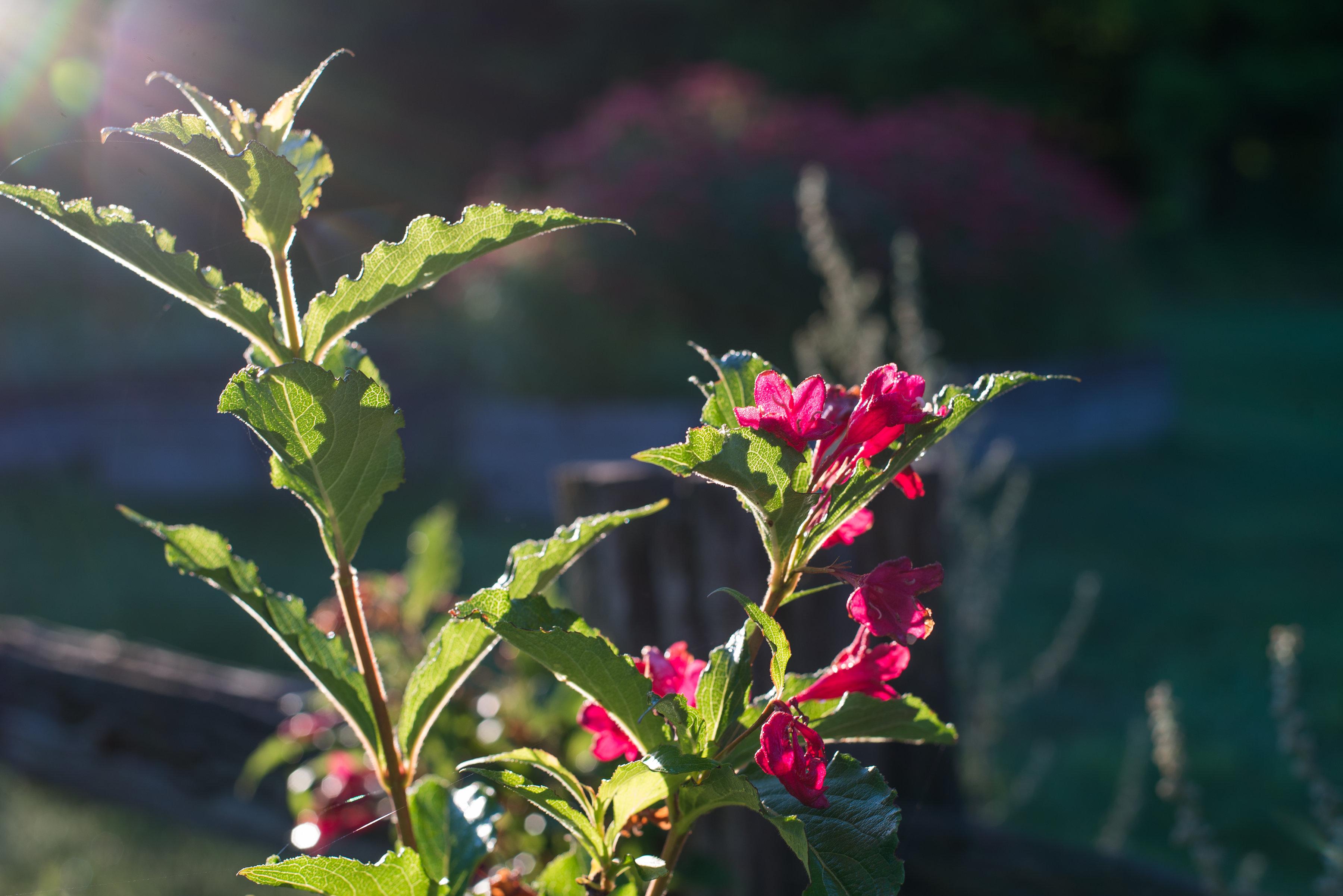 Jardin Inspirata Nature