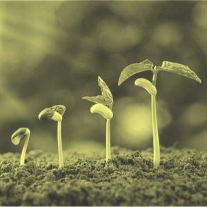 Patrimoine génétique des plantes