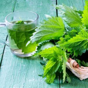 Ayurveda et plantes médicinales